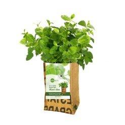 Growbag Mint SuperWaste Ditha Bonita