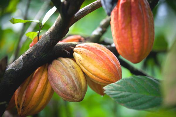Eerlijke-chocolade-duurzaam